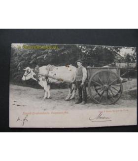 Brabants Dorpsleven 1900 -...