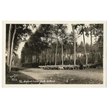 Boxtel 1912 - Steenweg - kudde schapen