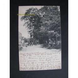 Ede 1904 - groete uit - Boschlaan