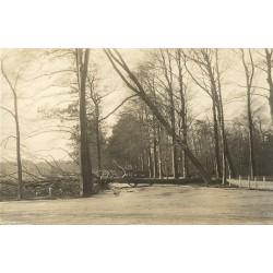 Den Haag 1921 - Haagsche Bosch - storm-fotokaart
