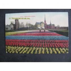 Lisse 1909 - Hyacintenvelden