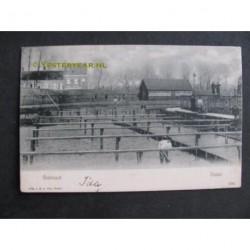 Tholen 1905 - Oesterput