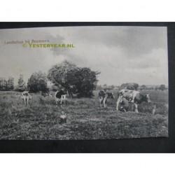 Brummen 1920 - Landschap met koeien
