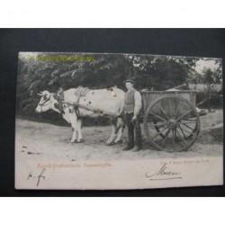 Brabants Dorpsleven 1900 - Ossenwagen - omg. Bergen op Zoom