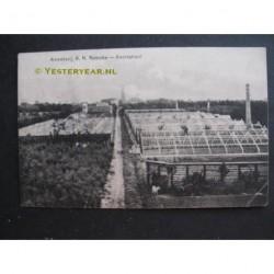 Kwintsheul 1912 - Kwekerij B.N.Reincke