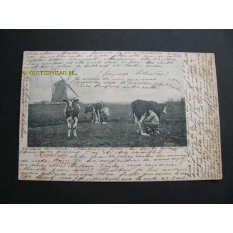 Den Haag 1901 - en omgeving (koeien en molen)